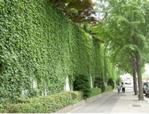 도시구조물 벽면녹화