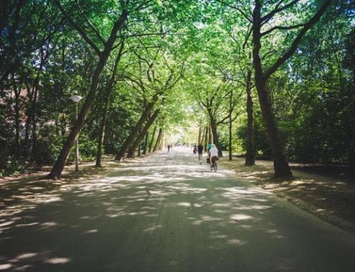 도시자연공원구역 내 삼림욕장, 유아숲체험원 등 허용